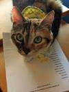 Skittles the cat. This is Marsha's cat.